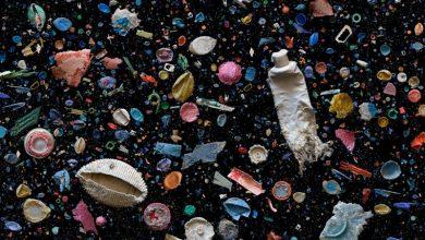 Artful swirls of plastic marine debris documented in images by photographer Mandy Barker