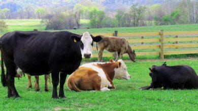 Ανακοίνωση για τα ανεπιτήρητα παραγωγικά ζώα από τον Δήμο Λευκάδας