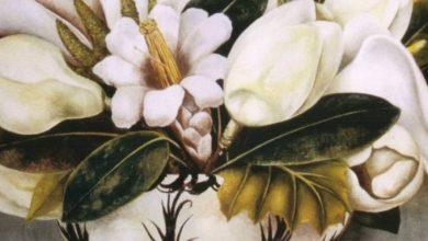 Από τον Βαν Γκογκ μέχρι τη Φρίντα Κάλο, κανείς δεν αντιστάθηκε στην ομορφιά των λουλουδιών