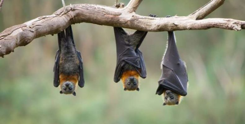 Κορυφαίοι Άγγλοι επιστήμονες θα βρεθούν στην Λευκάδα για να μελετήσουν νυχτερίδες