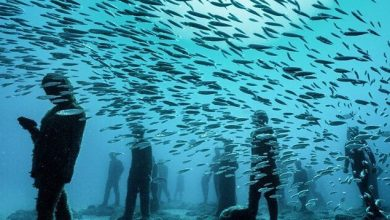 Museo Atlantico: Εντυπωσιακά γλυπτά και υδρόβια ζωή στο πρώτο υποθαλάσσιο μουσείο της Ευρώπης