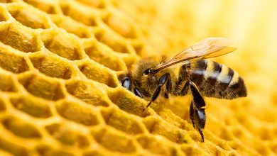 Οι μέλισσες (ίσως) καταλαβαίνουν το «μηδέν»
