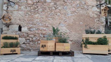 The Bee Camp: Υιοθέτησε και εσύ μία μέλισσα
