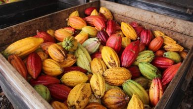 How the chocolate is made from bean to bar