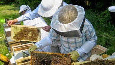 Σεμινάριο Μελισσοκομίας από τον Γεωργικό Οργανισμό «Δήμητρα» στη Λευκάδα