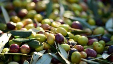 Παρουσίαση παραδοσιακών λιτρουβιών με παραγωγή ελαιολάδου & σαπουνιού στην Καρυά