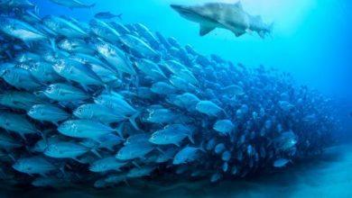 «Κατάληψη» στην άγρια ζωή των ωκεανών