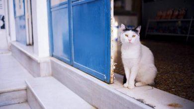 Time: Πώς να πληρώνεσαι για να παίζεις με 55 γάτες σε πανέμορφο ελληνικό νησί