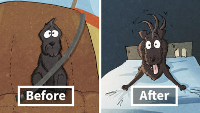 10+ Things That We Realized After Spontaneously Adopting A Dog From A Shelter
