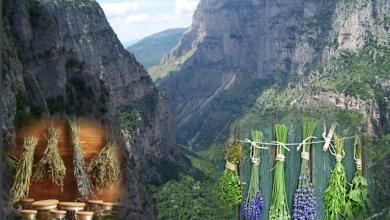 Δημιουργία Κέντρου Αρωματικών και Φαρμακευτικών Φυτών της Ηπείρου