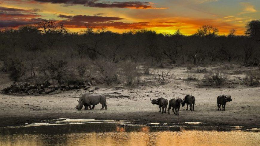 WWF: Ο πλανήτης μας έχασε το 60% του πληθυσμού των άγριων ζώων σε διάστημα σαράντα ετών