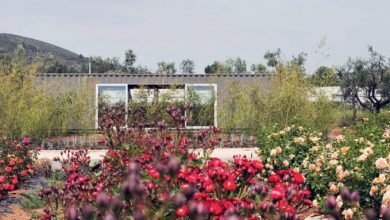 Flower Power: Άτομα με ειδικές ανάγκες καλλιεργούν φυτά και λουλούδια σ' ένα κτήμα στον Μαραθώνα