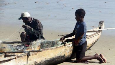 Οι μικροί Ντινό της Μαδαγασκάρης μας διδάσκουν το «Σύστημα D»
