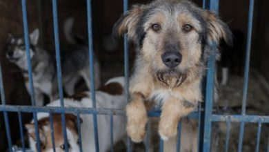 Απόφαση σταθμός στην Καλιφόρνια – Μόνο ζώα από καταφύγια θα πωλούνται στα pet shops