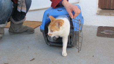 Το Σωματείο Ζωόφιλων Λευκάδας πηγαίνει στο Μεγανήσι για τη στείρωση γατών