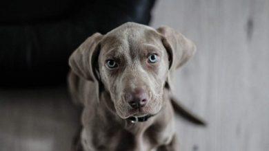 Σκύλοι βοηθοί στην υπηρεσία ατόμων με άνοια