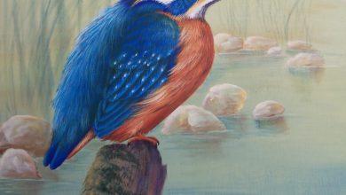 Ζεστές Αλκυονίδες μέρες: ο μύθος και ο συμβολισμός τους
