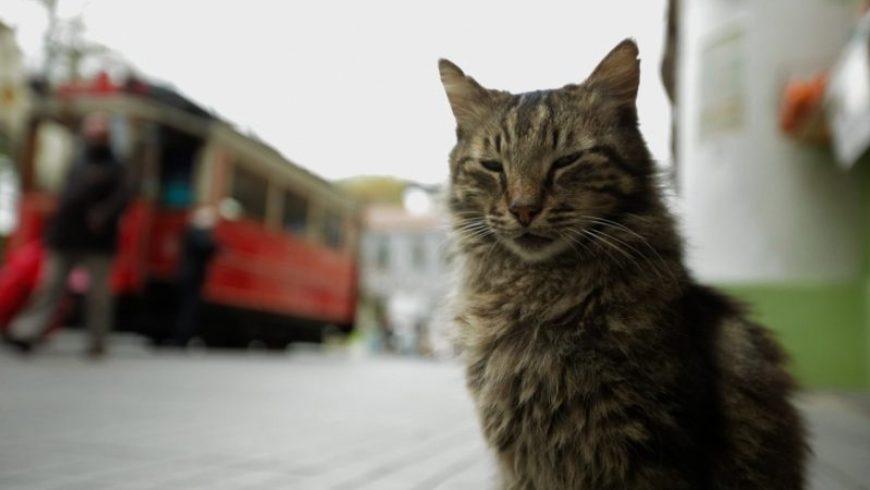 «Οι γάτες της Κωνσταντινούπολης» από την Κινηματογραφική Λέσχη Πρέβεζας