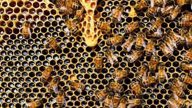 Οι μέλισσες ξέρουν να κάνουν πρόσθεση και αφαίρεση ισχυρίζονται επιστήμονες