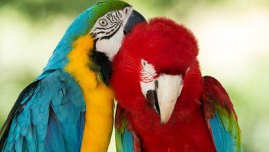Αυξάνονται συνεχώς τα υπό εξαφάνιση είδη ζώων