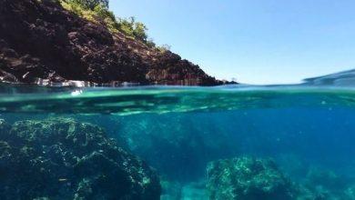 Blue Planet Live: Πέντε τρόποι για την προστασία της θάλασσας