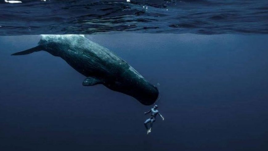«Χορεύοντας» με τις φάλαινες
