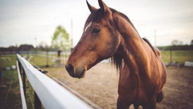 Ημερίδα στην Πρέβεζα: Το άλογο «σύντροφος, αθλητής, θεραπευτής»