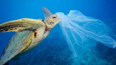 Έρευνα: Ο εφιάλτης των πλαστικών απειλεί την Ελλάδα