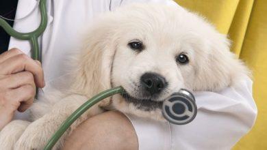 Πρόσκληση ενδιαφέροντος για ιδιώτη κτηνίατρο από το Δημοτικό Κτηνιατρείο Λευκάδας