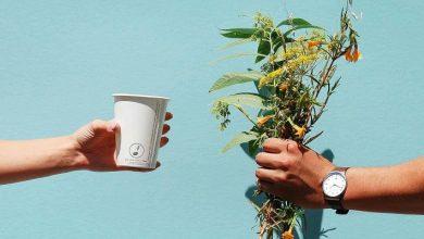 Τα ποτήρια μιας χρήσης που γίνονται δέντρα
