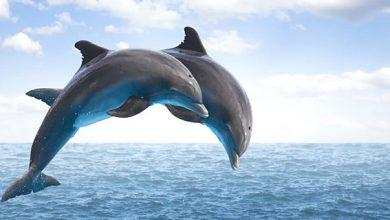 Άνοιξε το πρώτο παγκοσμίως καταφύγιο διάσωσης δελφινιών στην Ελλάδα!