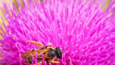 Γιατί εξαφανίστηκαν οι μέλισσες
