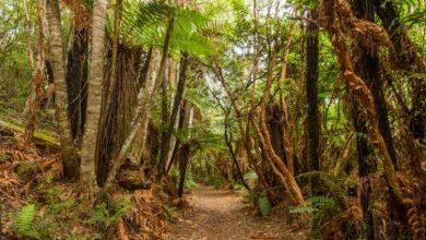 Ένα τρισεκατομμύριο δέντρα μπορούν να «φρενάρουν» την κλιματική αλλαγή
