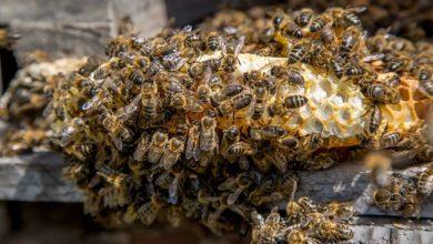 Plan Bee: Πώς η Ευρωπαϊκή Ένωση θα επιχειρήσει να σώσει τις μέλισσες