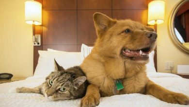 Pet-friendly ξενοδοχεία με πολυτελείς υπηρεσίες για τους τετράποδους φίλους