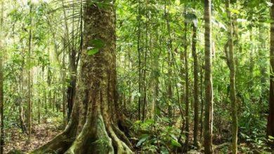 Οι τράπεζες προσλαμβάνουν… περιβαλλοντολόγους
