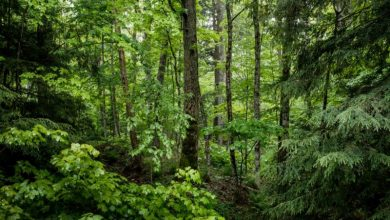 Η Ιρλανδία θα φυτέψει 440 εκατ. δένδρα έως το 2040 για την καταπολέμηση της κλιματικής αλλαγής