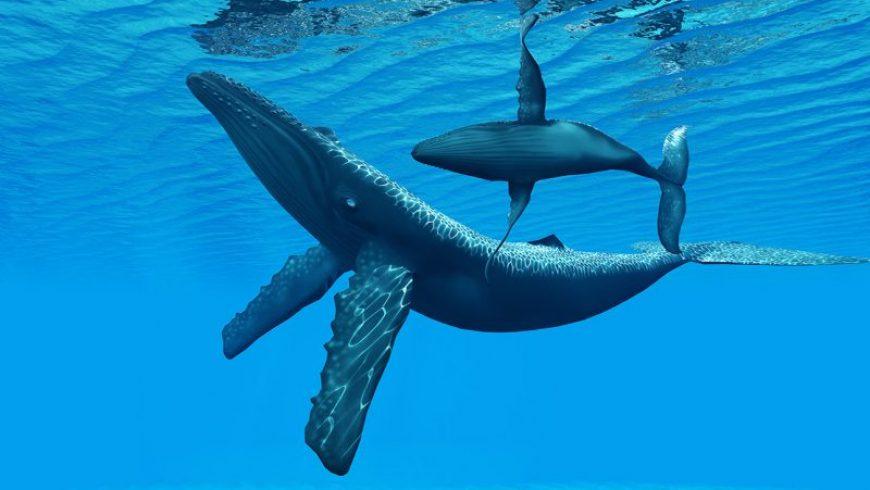 Και όμως, οι φάλαινες είναι… κουλτουριάρες