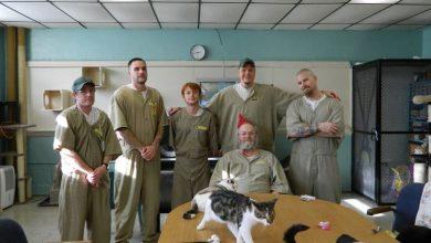 Οι γάτες «σώζουν» τους φυλακισμένους