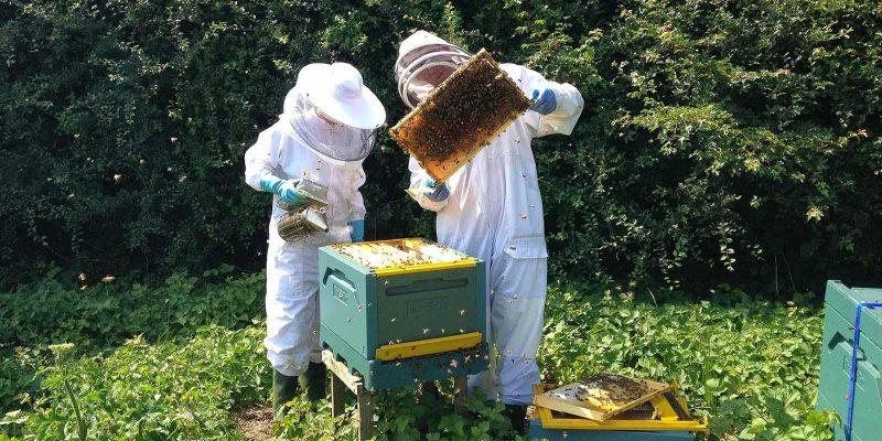 10 τρόποι για να προστατεύσουμε τις μέλισσες