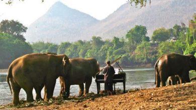 Ο μουσικός που παίζει μουσική στους ελέφαντες