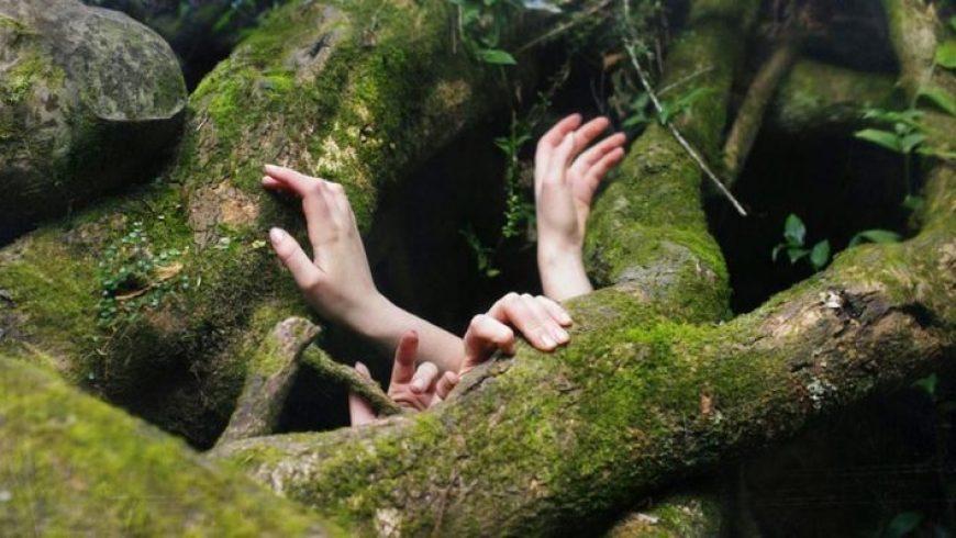 Το δάσος και το δέντρο