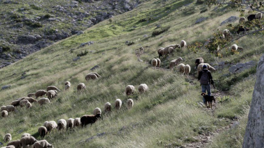 Η Μετακινούμενη Κτηνοτροφία και η Βυζαντινή Μουσική στον Κατάλογο της UNESCO