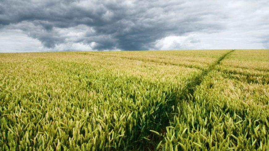 Κλιματική αλλαγή: Πώς επιδρά στις καλλιέργειες