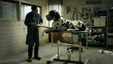 «Dogman» από την Κινηματογραφική Λέσχη του Ορφέα