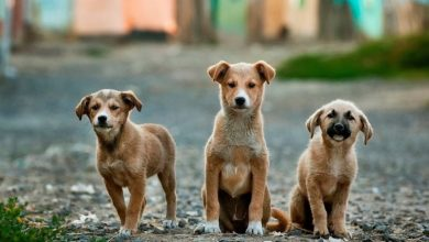 Ο Δήμος Λευκάδας καταδικάζει τις πρόσφατες δηλητηριάσεις ζώων