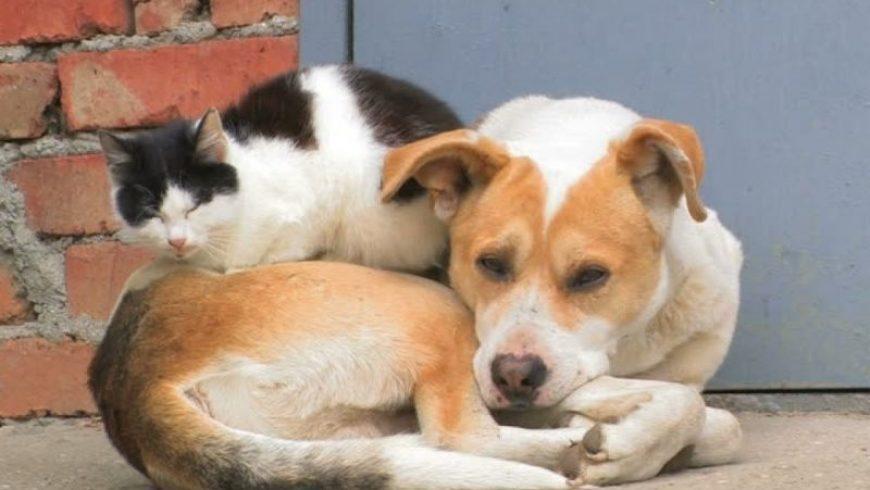 Δήμος Λευκάδας: Φροντίδα του Δήμου για τα αδέσποτα ζώα συντροφιάς