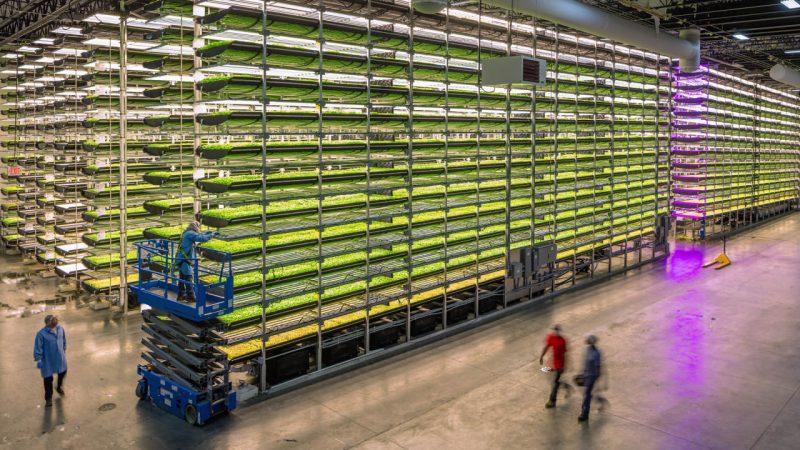 Στο Αμπου Ντάμπι η μεγαλύτερη κάθετη φάρμα στον κόσμο