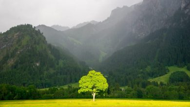 Τουρισμός: Το δέντρο και το δάσος