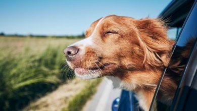 Ταξίδι με αυτοκίνητο: Η τάση το καλοκαίρι της πανδημίας